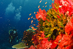 Visit the best marine life in Fiji with Taveuni Ocean Sports.