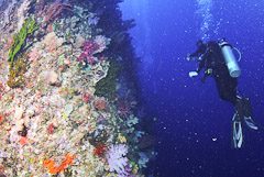 Dive Fiji's best dive site, the White Wall, with Taveuni Ocean Sports.